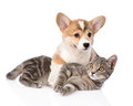 Pembroke Welsh Corgi puppy hugging cat. isolated on white backgr Royalty Free Stock Photo