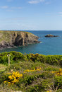 Pembrokeshire coast path caerfai bay wales uk west near st davids and in the national park Royalty Free Stock Photography