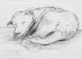 Pencil drawing of dog sleeping Stock Image