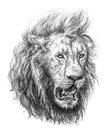 Pencil drawing of a lion's head Stock Photos