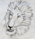 Pencil drawn sketch male lion s head mane Stock Photo