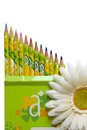 Pencils and white daisy flower Stock Photos