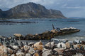 Penguin Colony in Hermanus, Garden Route, South Africa Royalty Free Stock Photo