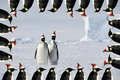Penguin couple xmas card Royalty Free Stock Images