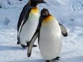 Penguin walk on snow Royalty Free Stock Photo