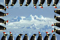 Penguin xmas card Stock Image