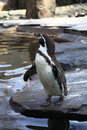 Penguin at zoo standing on the stone Stock Photo