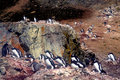 Penguins antarctica on rock in Stock Photo