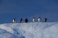 Penguins on ice floe a ridge part of an as they lookout for leopard seals Stock Photography