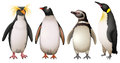 Penguins illustration of the on a white background Stock Image