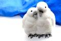 Penguins in love ornament