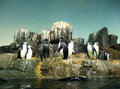 Penguins at Play Royalty Free Stock Image