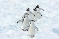 Penguins Team Royalty Free Stock Photo