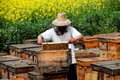 Pengzhou, China: Beekeeper at Work Stock Photography