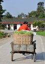 Pengzhou, China: Farmer with Cart of Green Beans Stock Image