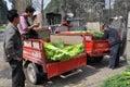 Pengzhou, China: Farmers with Garlic Stock Images