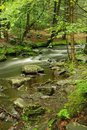 Pennsylvania Forest Stream In Spring Royalty Free Stock Photos