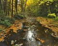 Pennsylvania Stream In Autumn Royalty Free Stock Image