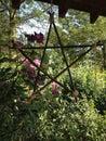 Pentagram hanging outside in garden Stock Photography