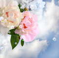 Peonies in the clouds Stock Image