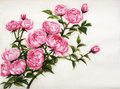 Peonies watercolor original painting of asian style Stock Photos
