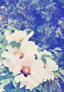 Peony bush tinted big pink flower tree in shade branch Royalty Free Stock Image