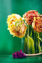 Peony or Finola Double Tulip on Green Background