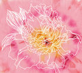 Peony flower on batik background Stock Photos