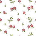 Peony flower pattern floral with peonies on a white background Stock Photos