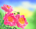 Peony Flowers Bouquet Over Blu...