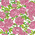 Peony flowers seamless vector pattern wallpaper with pink Stock Images