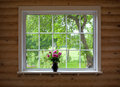 Peony flowers on window sill wood log house Stock Images
