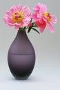 Peony roses on vase Royalty Free Stock Photo