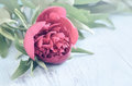 Peony on a wooden background Royalty Free Stock Photo