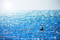 People bathing in the sea, Sunny water sparkles Royalty Free Stock Photo