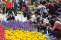 People are busy on their hubbies taking flower photo date mar location wai chai hong kong Stock Photos