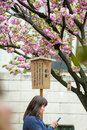 People enjoy cherry blossoms sakura in ueno park tokyo japan april is visited by up to million for annual Stock Photo