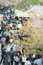 People enjoy cherry blossoms sakura in ueno park tokyo japan april is visited by up to million for annual Stock Image