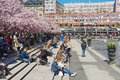 People enjoy lunchtime under blossoming cherry trees at Kungstradgarden in Stockholm, Sweden. Royalty Free Stock Photo