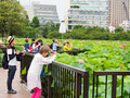 People enjoy taking photograph at lotus pond in Ueno park