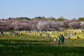 People enjoying sunny Spring day in Japan