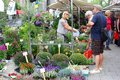 People flowers garden plants market, Jordaan, Amsterdam, Holland