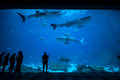 People observing fish at the aquarium 2 Royalty Free Stock Photo