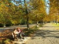People relax in the park under fall trees autumn yellow colored Royalty Free Stock Image