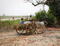 People riding ox cart at Mingun village in Mandalay, Myanmar Royalty Free Stock Photo