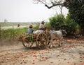 People riding ox cart at Mingun village in Mandalay, Myanmar Royalty Free Stock Photo