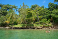 People snorkel in the sea and look tropical shore two looking with lush vegetation caribbean bocas del toro panama Royalty Free Stock Images