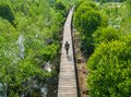 People Walking on the Mangrove bridge with view from Above Royalty Free Stock Photo
