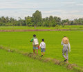 People walking on the rice fields in Dong Thap, Vietnam Royalty Free Stock Photo