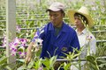 People work at the orchid farm in Samut Songkram, Thailand. Royalty Free Stock Photo